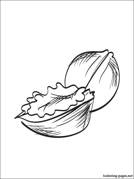560x750 Walnuts Coloring Page Coloring Pages