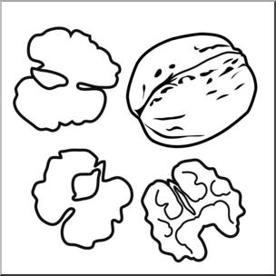 304x304 Clip Art Walnuts Bampw I Abcteach