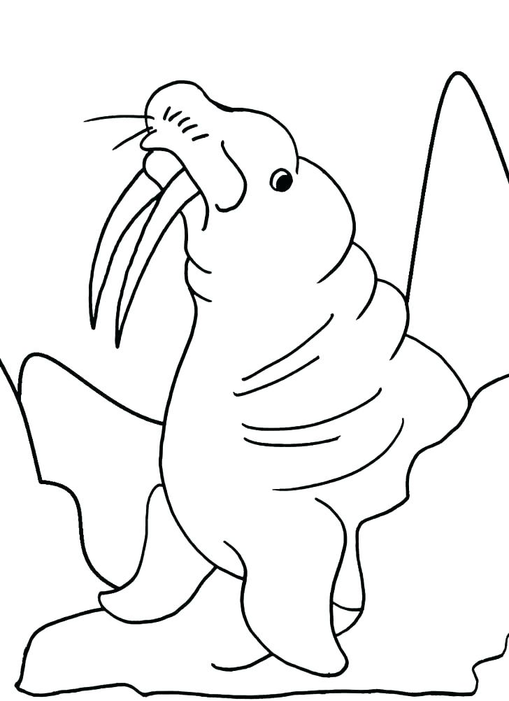 728x1002 Walrus Coloring Page Printable Walrus Coloring Pages For Walrus