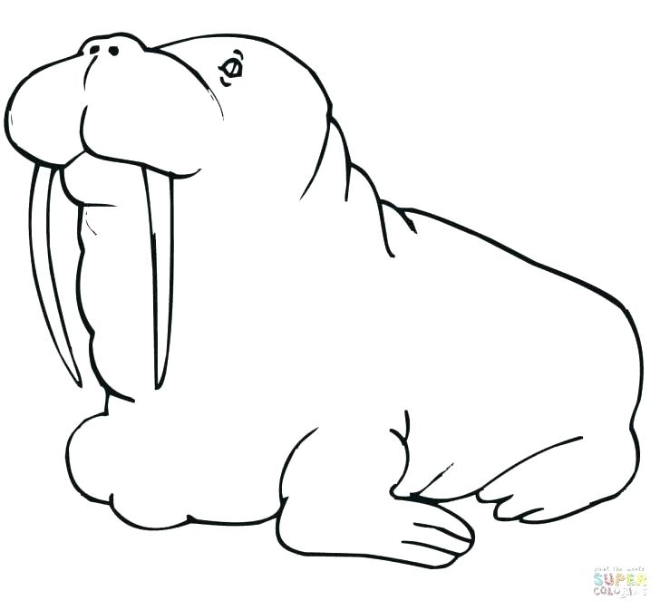 The Best Free Walrus Coloring Page Images Download From 50 Free