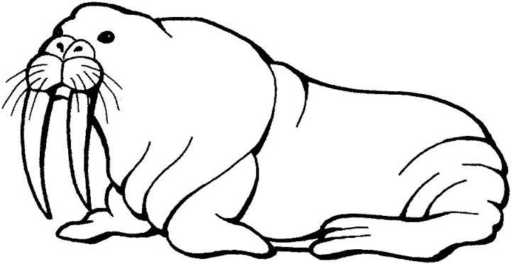 720x373 Walrus Coloring Page For Kids