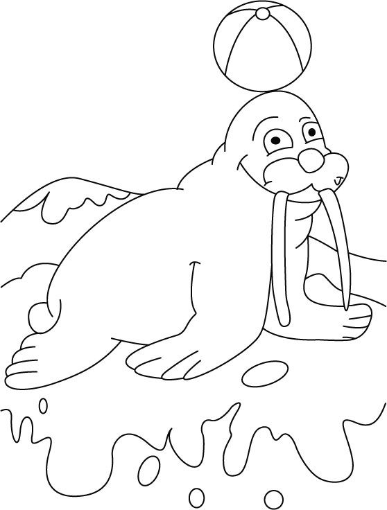 558x736 Ball On Walrus Terrace Coloring Pages Download Free Ball On Clip
