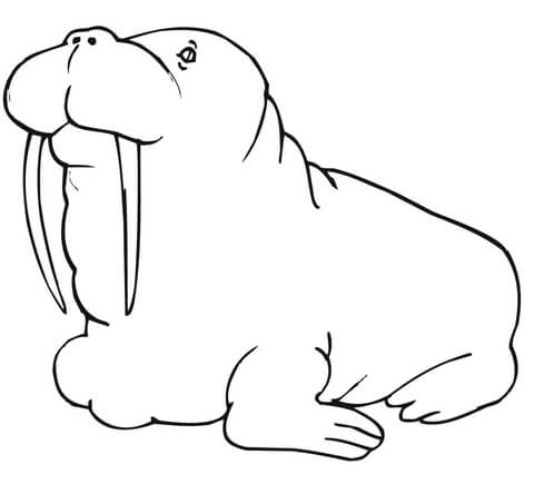 480x444 Fat Walrus Type Coloring Page