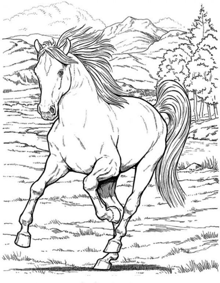 700x900 Free Realistic Wild Horse Coloring Pages To Print Animal