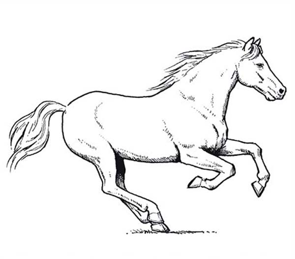 600x526 Horse Amazing Pace In Horses Coloring Page