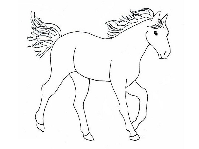 801x600 Horse With Big Stomach Horses Kids Net