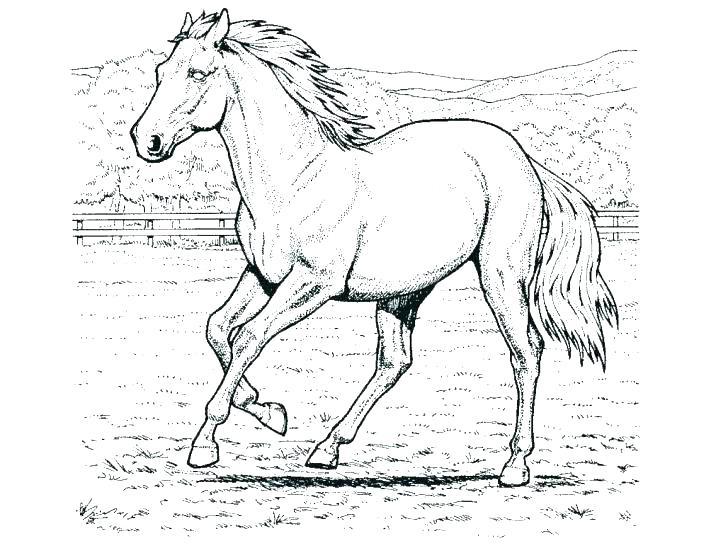 728x546 Coloring Pages For Adults Easy War Horse Stunning Toddlers