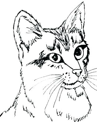 313x395 Coloring Pages Of Cats Free Cat Coloring Pages Packed With Kitten