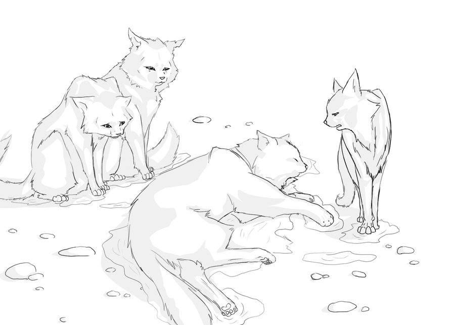 900x643 Warrior Cat Coloring Pages To Print
