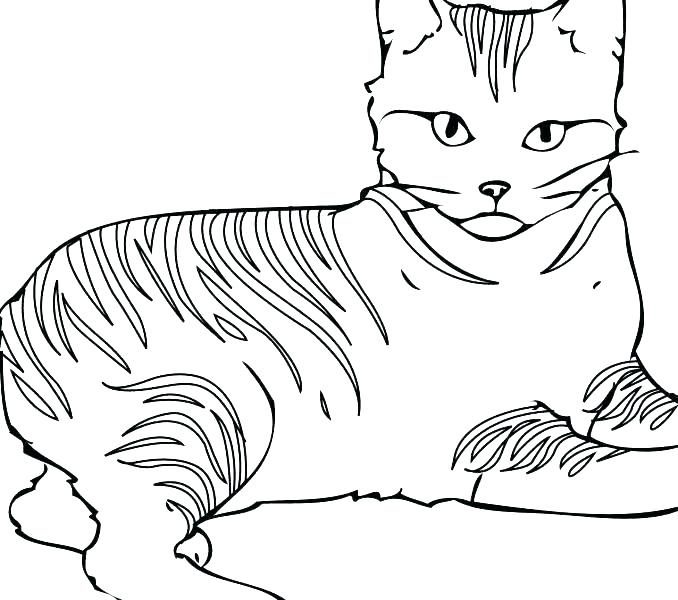 678x600 Cat Coloring Pages Free Printable Or Cat Coloring Pages Free