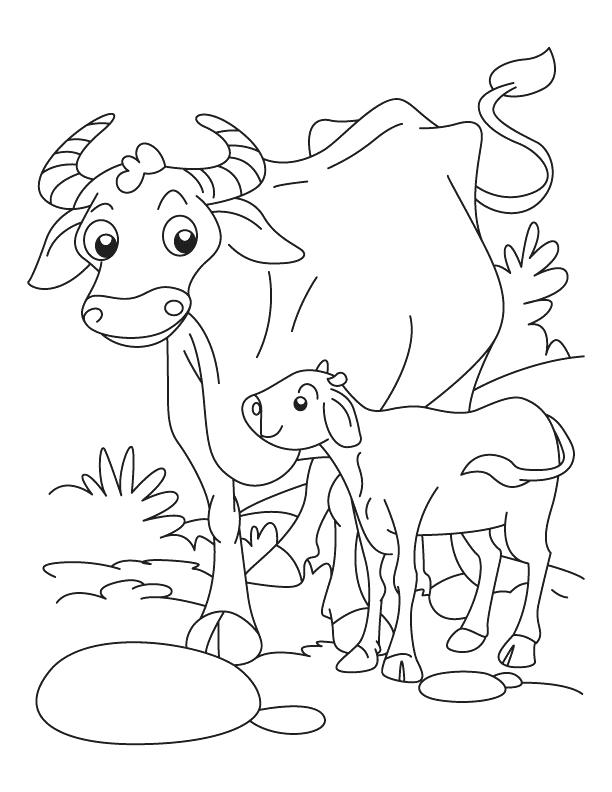 612x792 Buffalo Coloring Page Images Of Their Animals And Babies Coloring