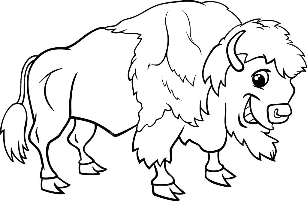 1023x671 Cape Buffalo Coloring Pages Bison Buffalo Coloring Page Stock