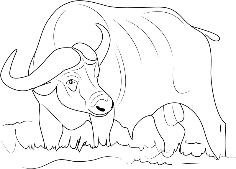 800x573 Real Heavy Machines Buffalo Coloring Pages Cliparts