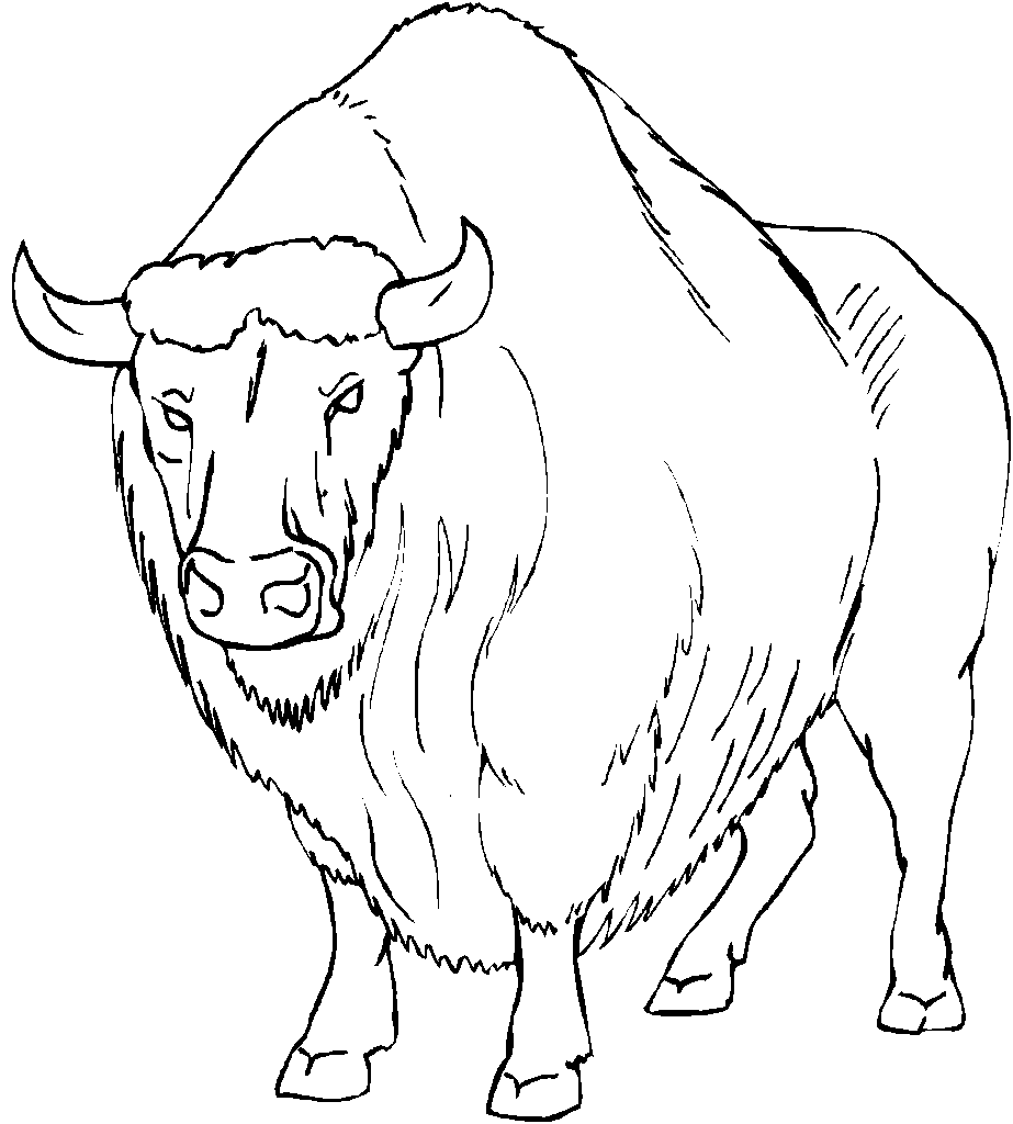 923x1024 Bison Coloring Pages