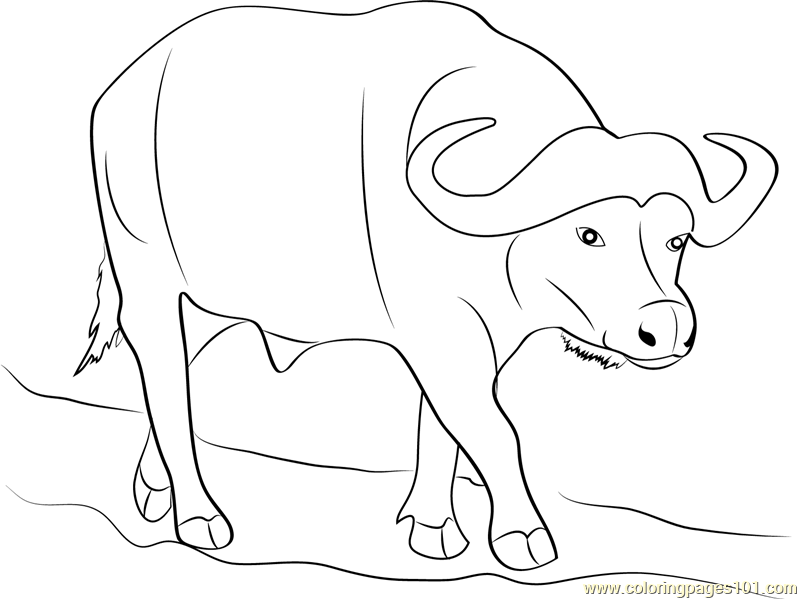 800x599 Wild Buffalo Coloring Page