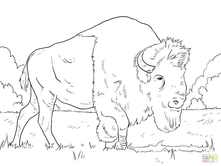 736x552 Buffalo Coloring Page Bison Animal Coloring Pages Buffalo Coloring