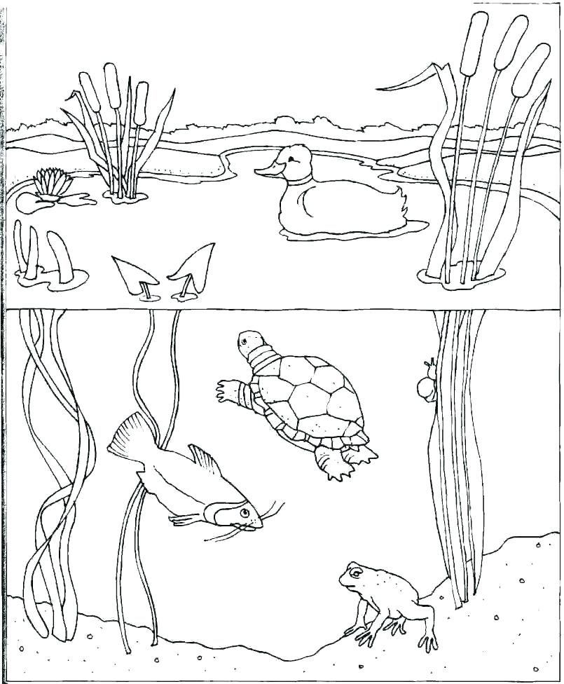 805x976 Water Coloring Pages Drinking Water With A Straw Coloring Pages