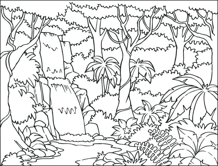728x555 Waterfall Coloring Page Jungle Tree Coloring Page Forest Trees