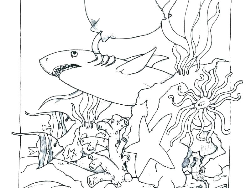 785x600 Printable Ocean Coloring Pages