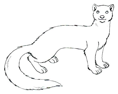 488x392 Coloring Pages Printable Unicorn Weasel Drawing Least
