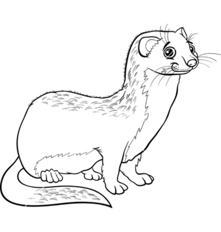 855x900 Coloring Pages Weasels, Printable For Kids Adults, Free