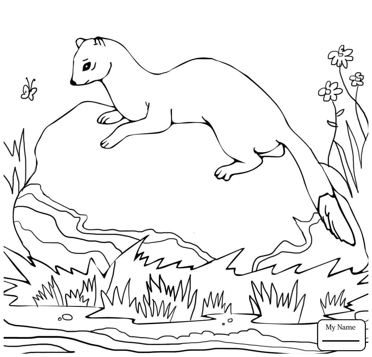 1224x1175 Unique Weasel Coloring Page Gallery Printable Coloring Sheet