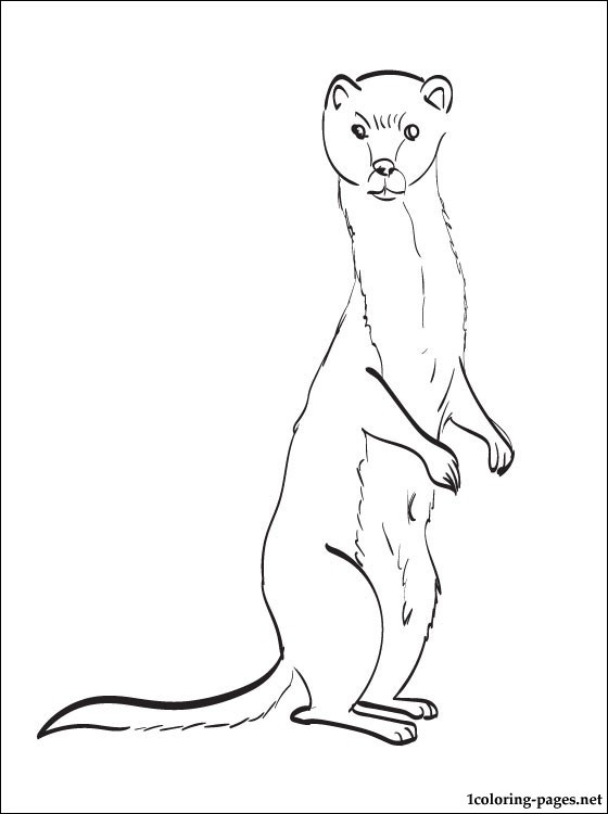 560x750 Weasel Coloring Page For Kids Coloring Pages