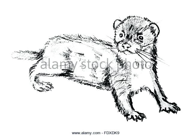 640x454 Coloring Pages Disney Free Least Weasel Images And Stock Photos