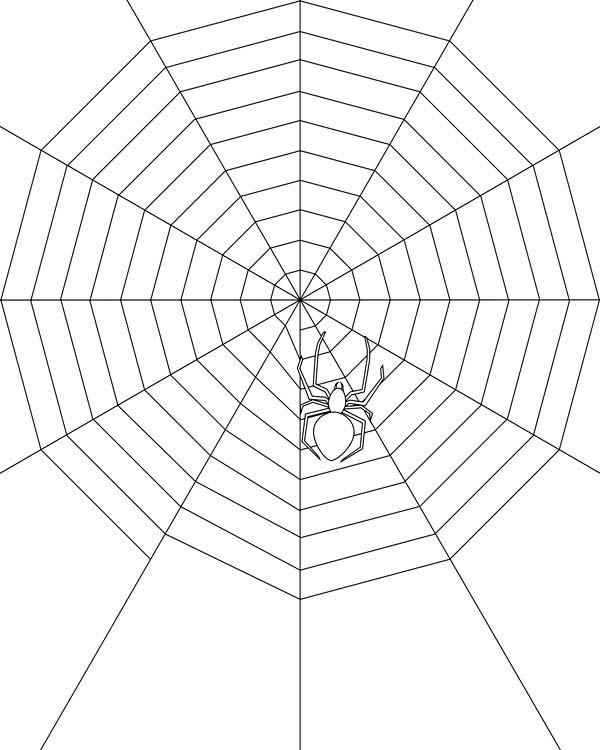 600x750 Spider Make Very Wide Spider Web Coloring Page Color Luna