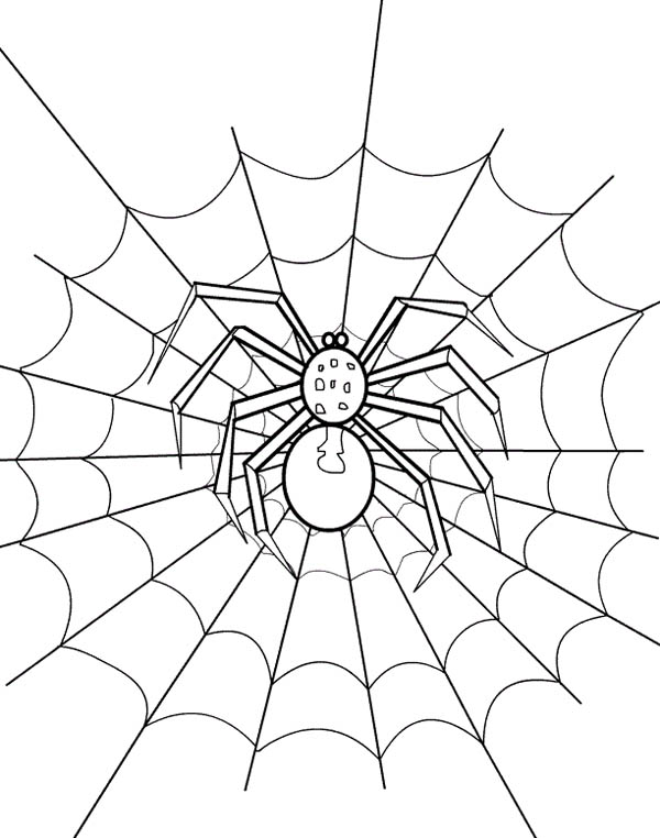 600x762 Spider Web Coloring Page