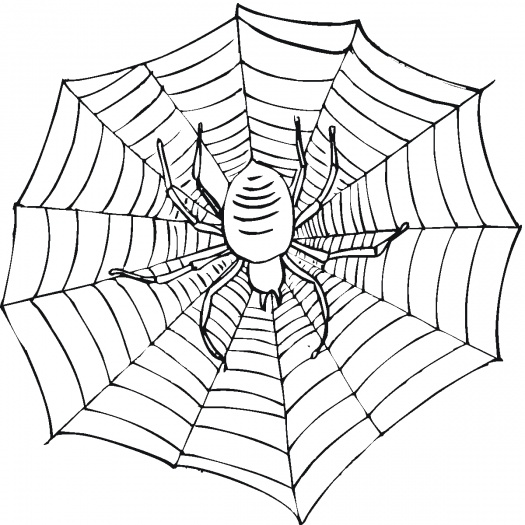 525x525 Spider Web Coloring Page