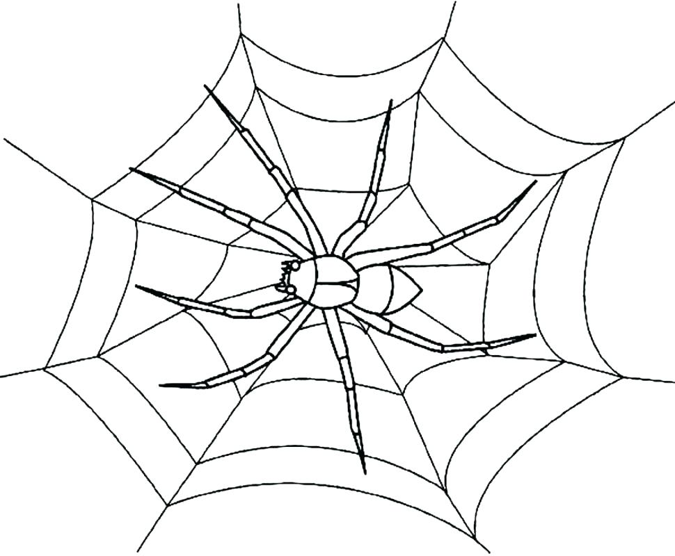 970x800 Spider Web Coloring Pages Spider Web Coloring Pages Large Size