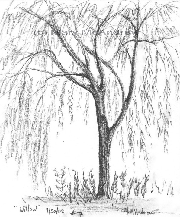 596x720 Weeping Willow Coloring Pages