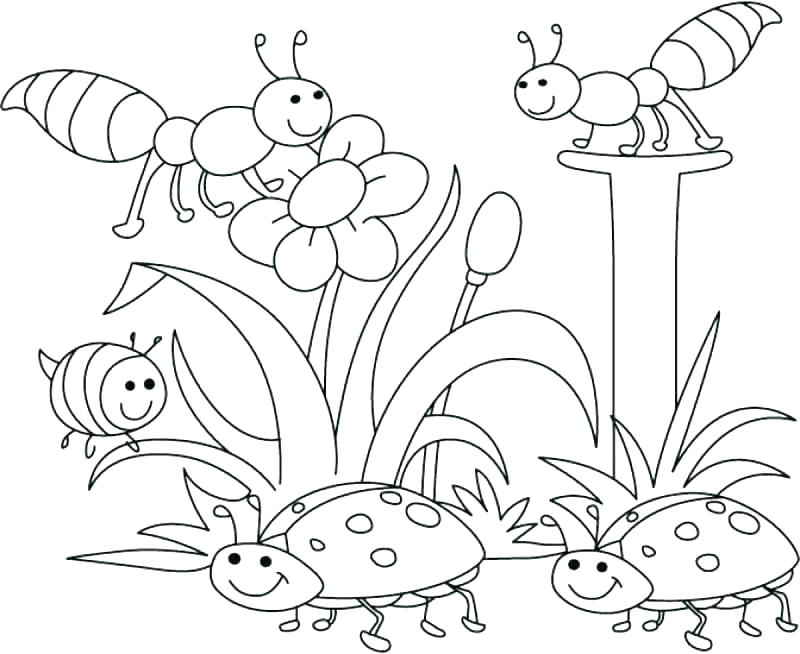 800x654 Spring Coloring Pages Plus Spring Coloring Pages Spring Coloring