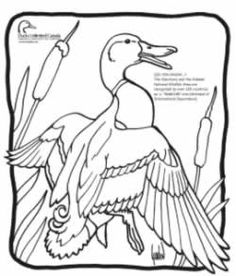 236x276 Bald Eagle Coloring Page Bald Eagle Coloring Page Here Home Bald