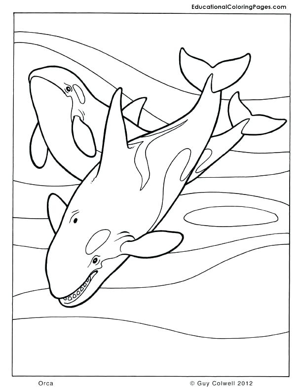 612x792 Whale Coloring Pages Killer Whale Coloring Pages Page Whale