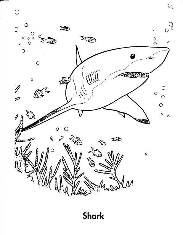 618x796 Whale Shark Coloring Pages Whale Coloring Pages Printable Shark