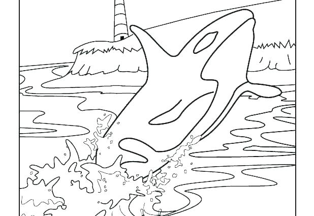 618x425 Whales Coloring Pages Whale Coloring Pages Killer Whale Coloring