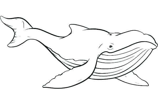 600x352 Whales Coloring Pages Whale Coloring Sheet Whale Coloring Sheet