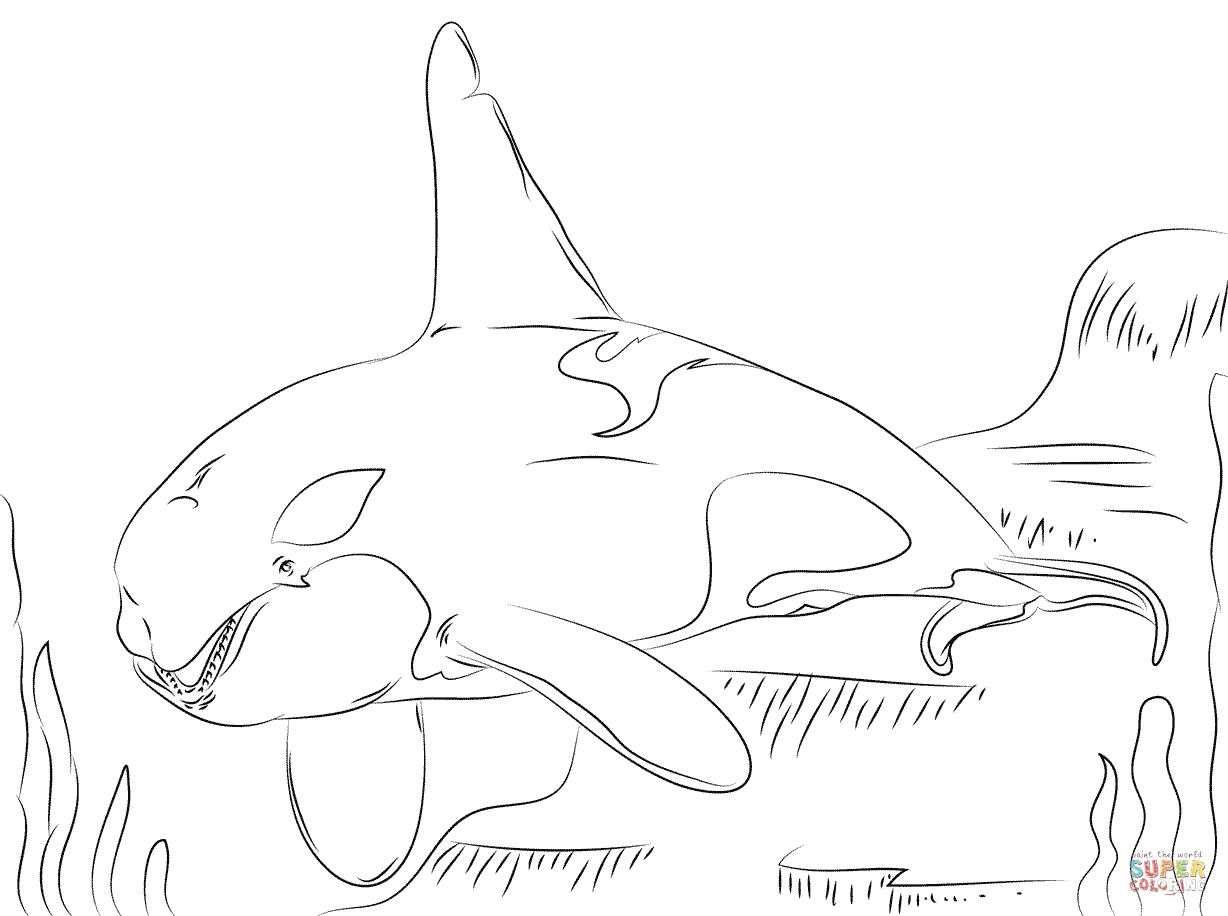 1228x916 Whale Coloring Pages Awesome Beautiful Killer Whale Coloring Page