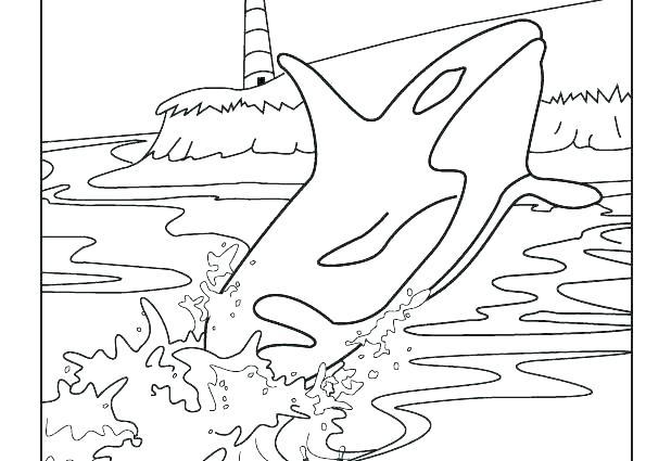 618x425 Whale Coloring Pages Whale Coloring Pages Coloring Humpback Baby