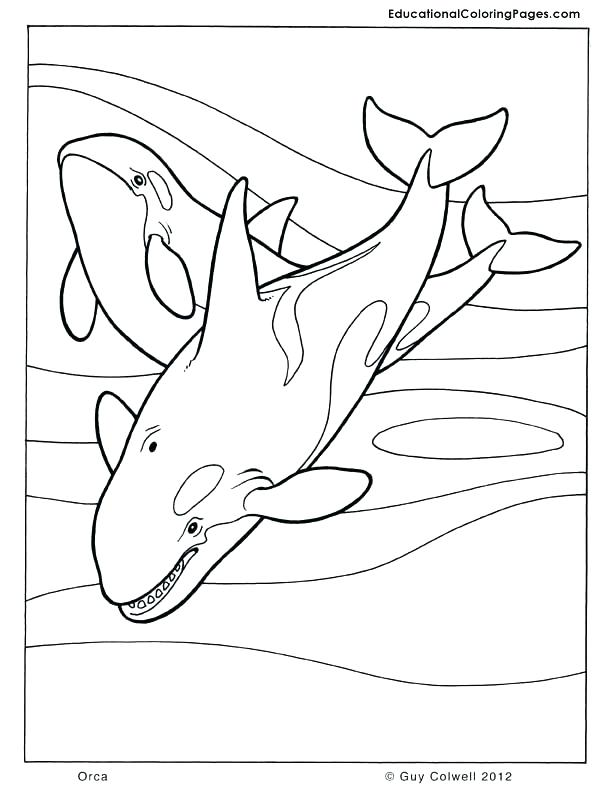 612x792 Whales Coloring Pages Whale Coloring Pages Killer Whale Coloring