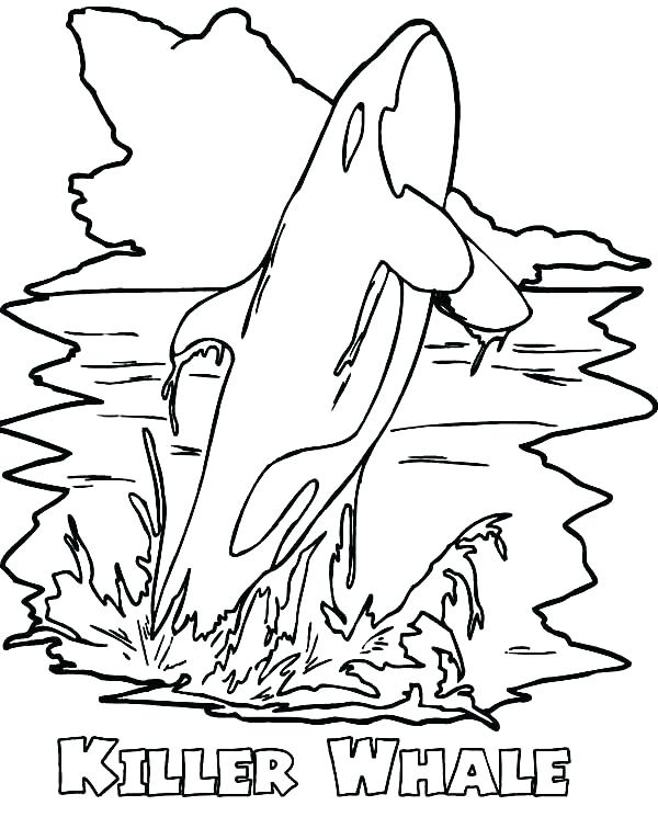 600x745 Killer Whale Coloring Page