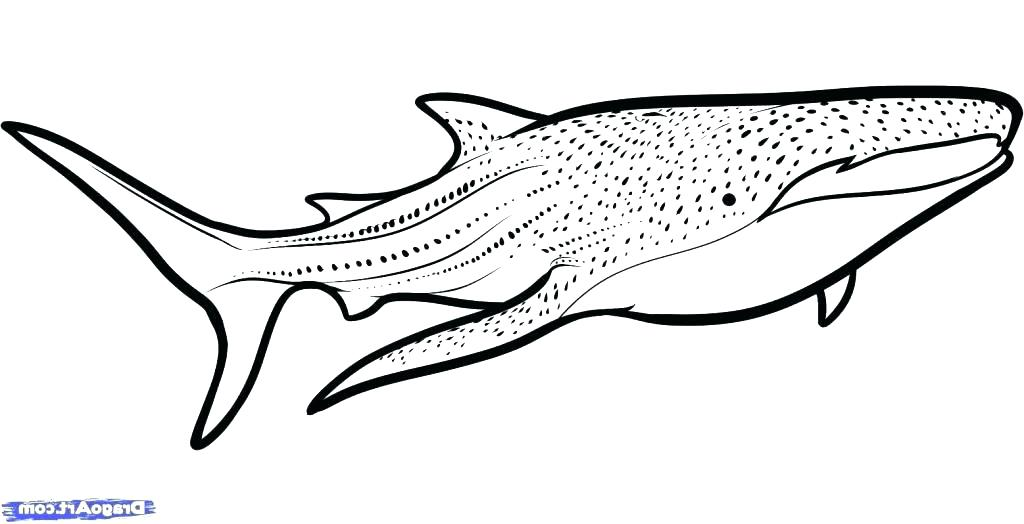 1024x524 Shark Coloring Pages Free Whale Shark Coloring Pages Whale Shark