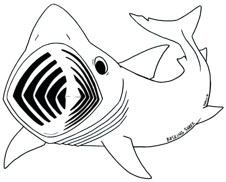 900x724 Shark Picture To Color Whale Shark Line Drawing Pencil