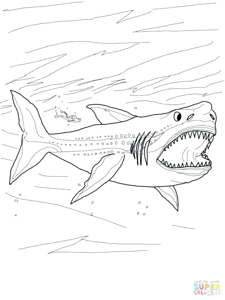 728x971 Whale Shark Coloring Page Coloring Page Shark Shark Coloring Pages