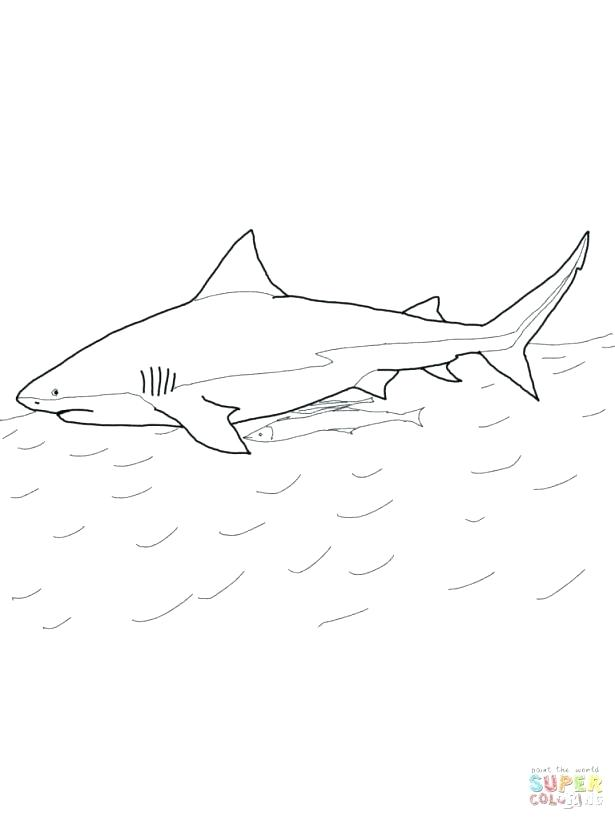 615x820 Whale Shark Coloring Page Whale Shark Coloring Page Medium Size