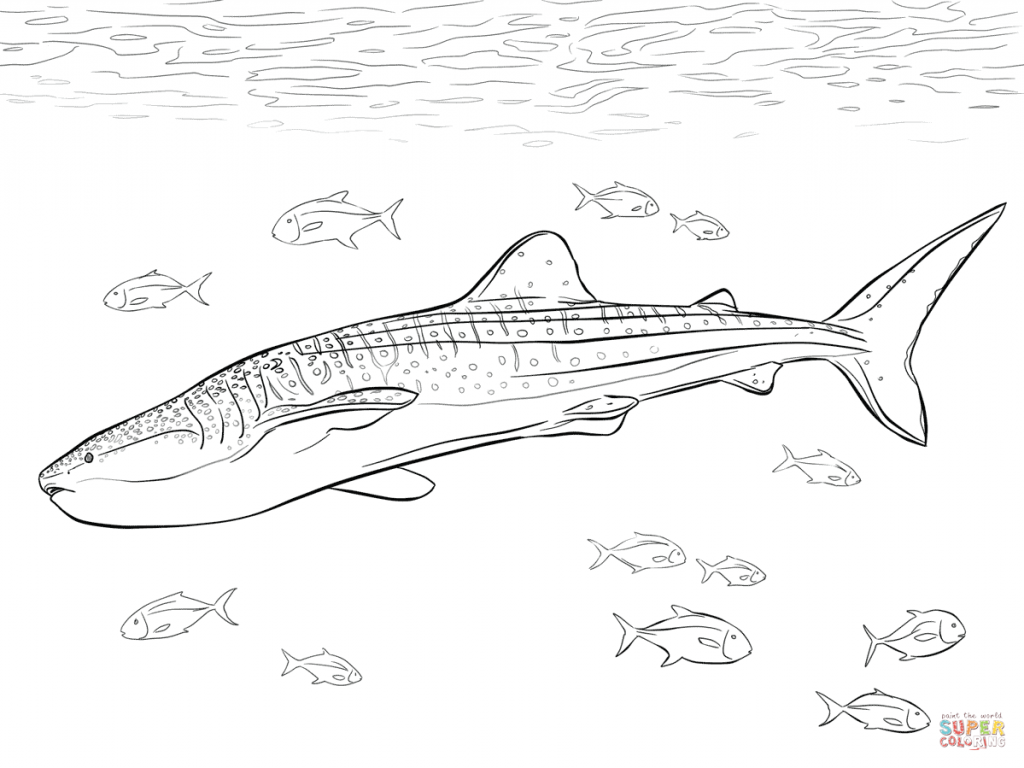 1024x768 Whale Shark Coloring Pages