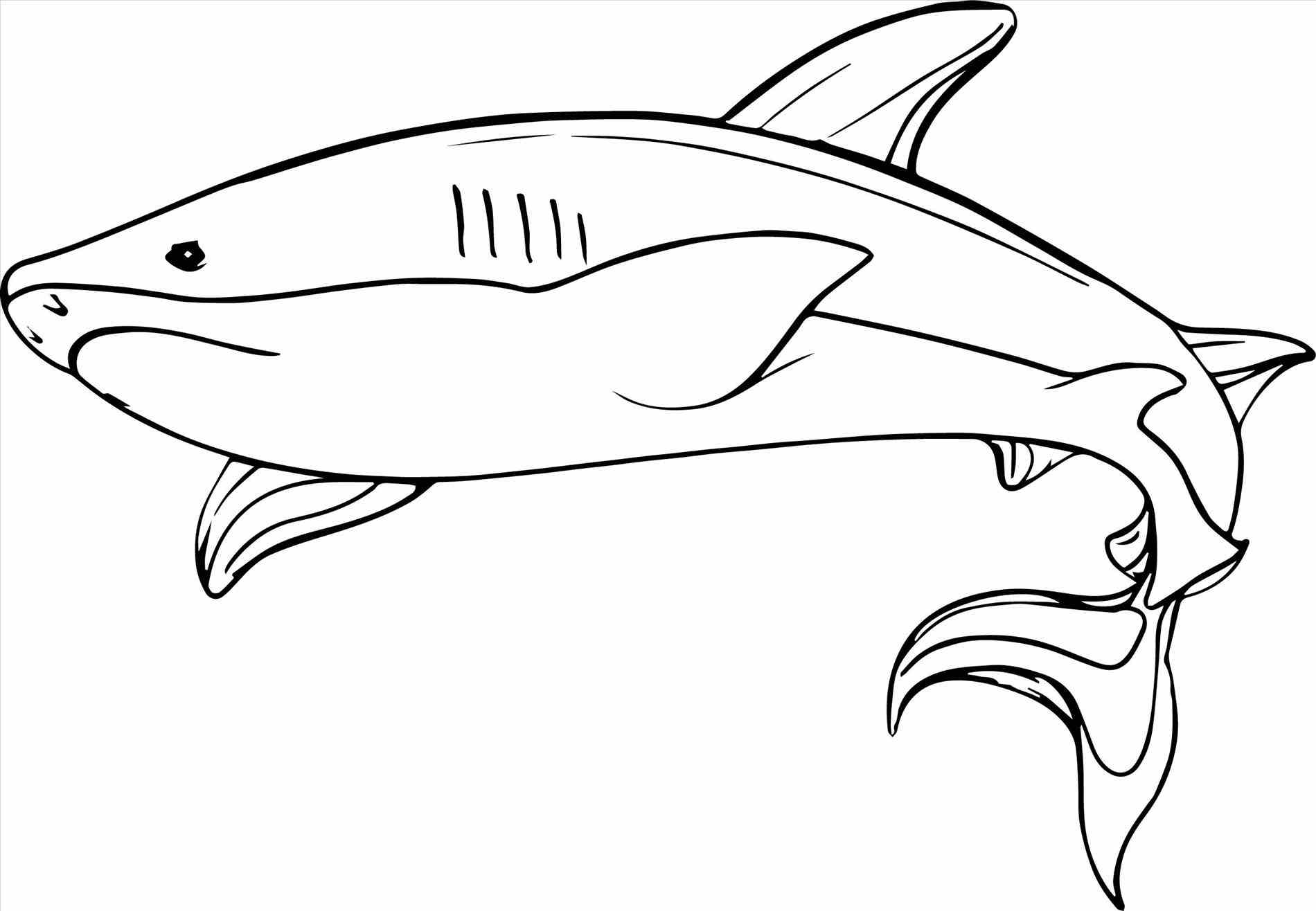 1900x1316 Whale Shark Coloring Pages Pilular Center Throughout Page