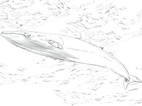 480x360 Whale Shark Coloring Pages Whale Shark Coloring Sheets
